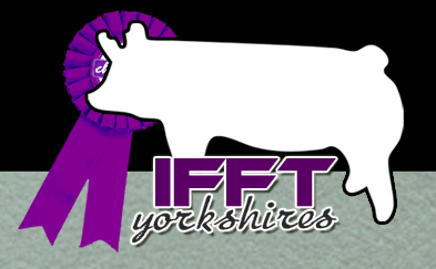 Ifft Yorkshires